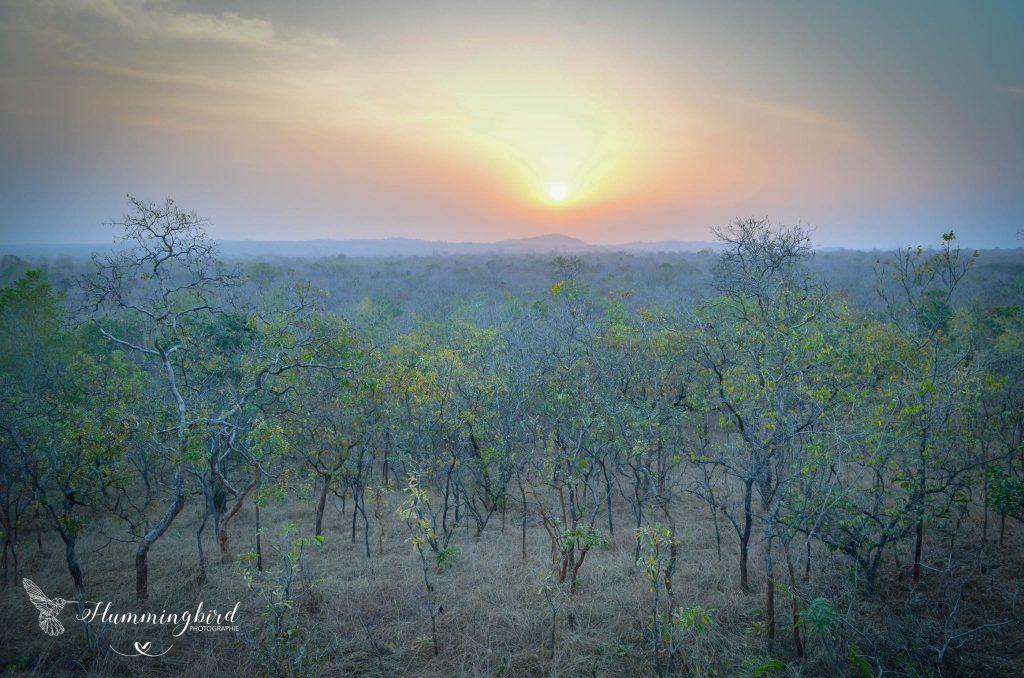 Hummingbird photographie paysage coucher de soleil