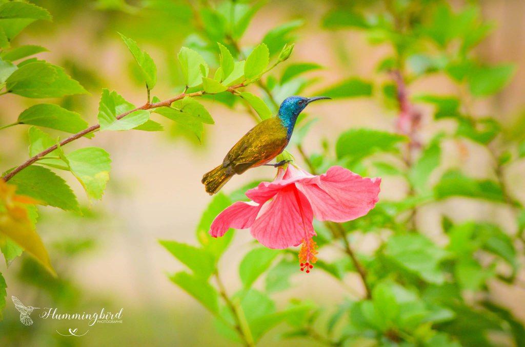 Photo oiseau Hummingbird photographie