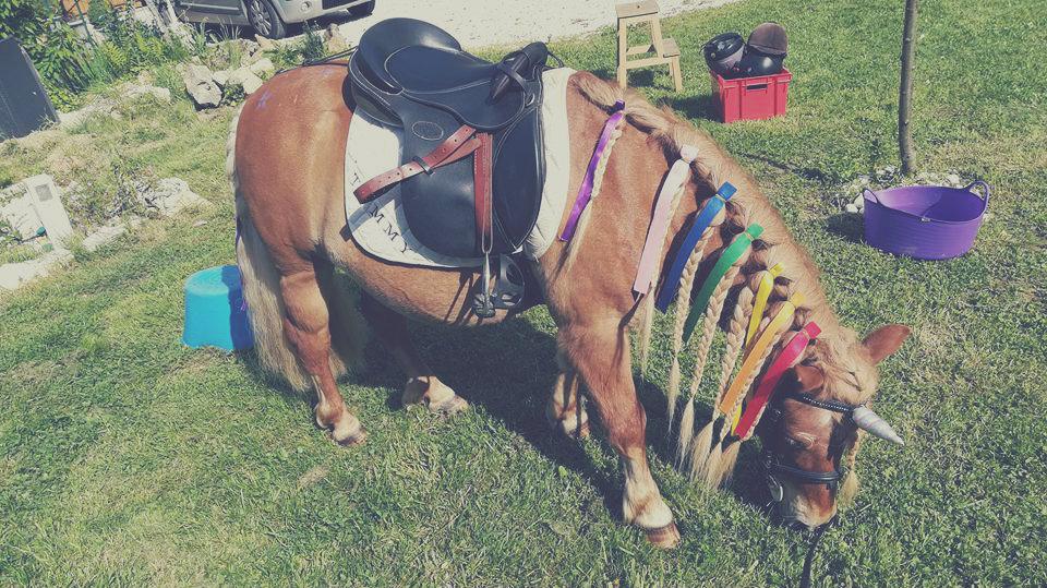 Timmy Ponycorne des Poneys et du rêve