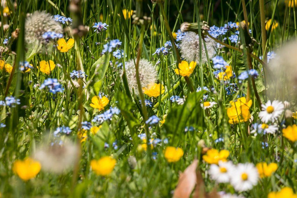 biodiversité blog Souriez rose