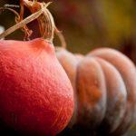 recette potimarron châtaignes blog Souriez rose