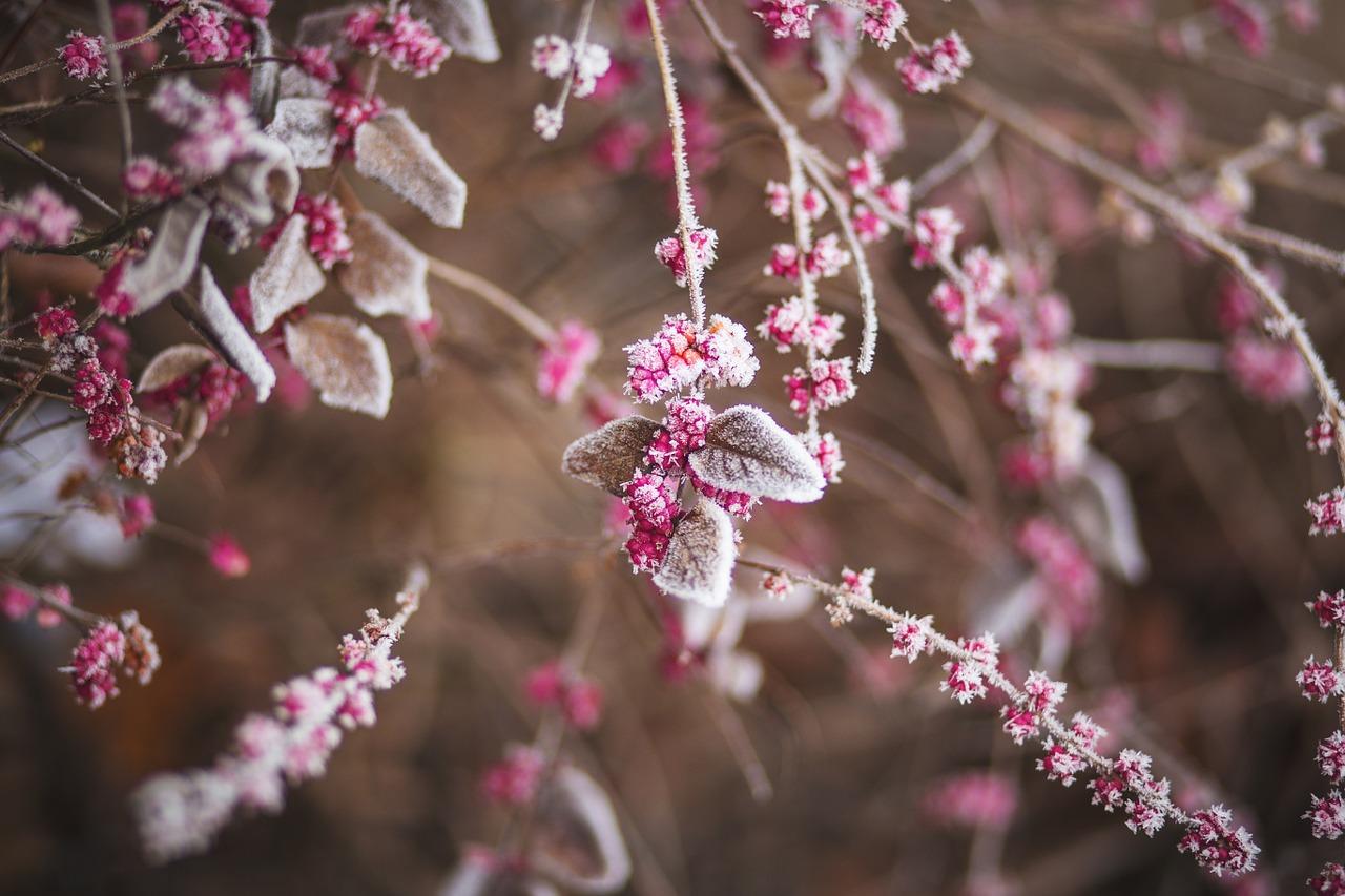 douceurs hivernales blog Souriez rose