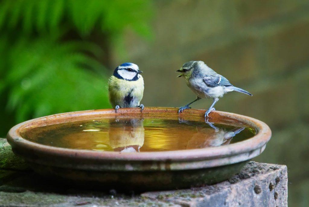 oiseaux nature Souriez rose naturopathie