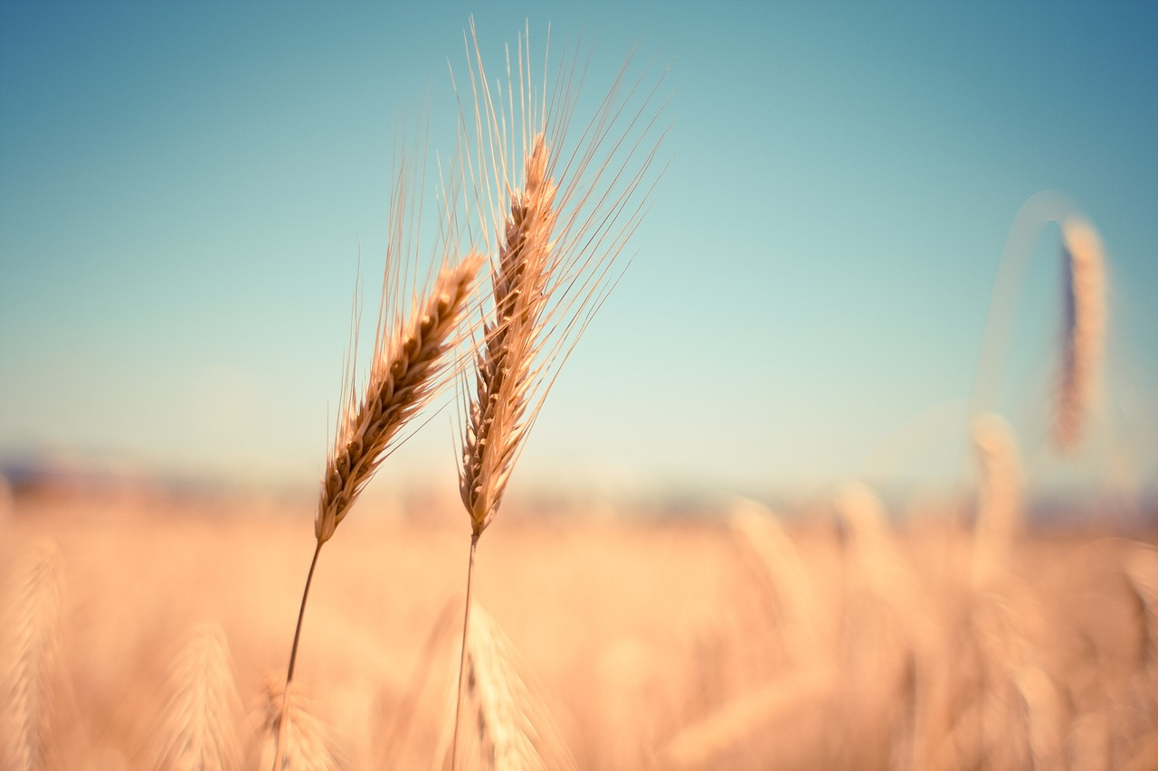 blé gluten blog souriez rose