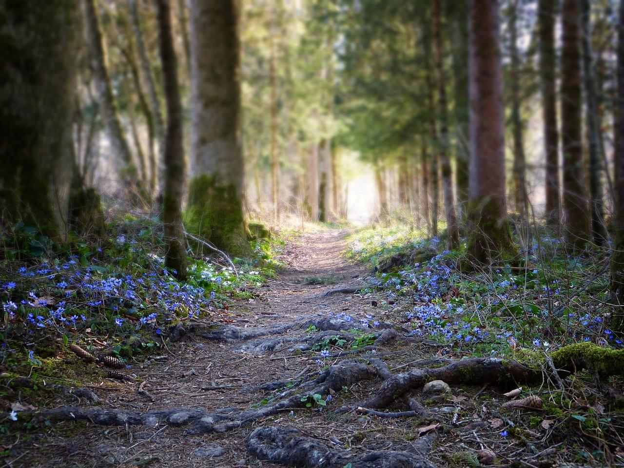 Gérer son stress Souriez rose naturopathie